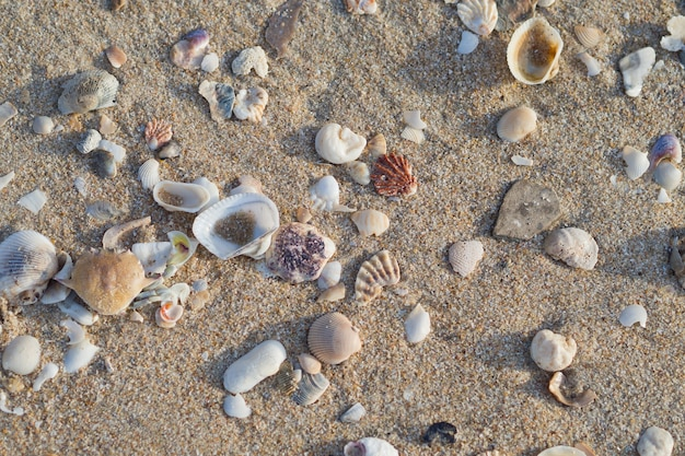 Shells on the ground
