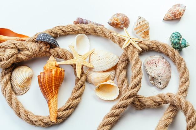 Shells isolated