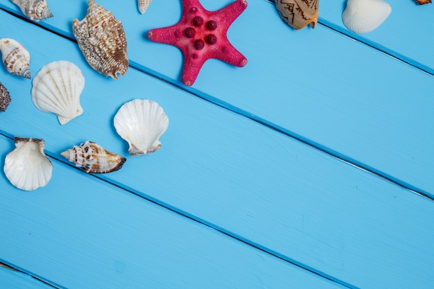 Shells on the old blue wooden boards.
