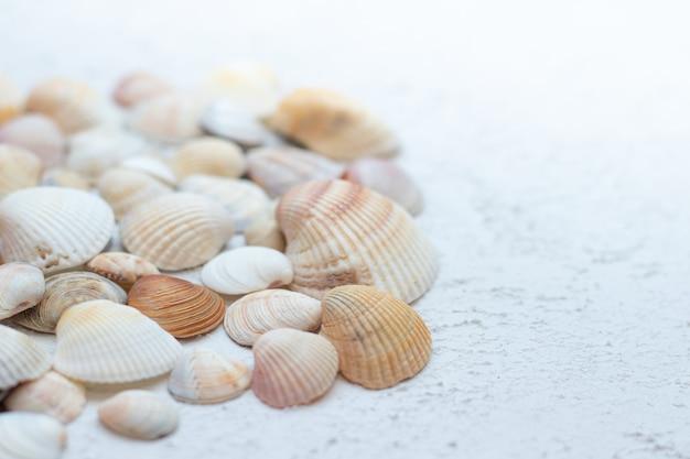 밝은 배경에 조개입니다. 휴가에 관한 기사. 바다 조개는 밝은 배경에 놓여 있습니다