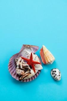 Раковины на синем бумажном фоне. лето, морской набор, коллекция морских раковин. летние каникулы, фон океана. плоская планировка, вид сверху, копия пространства.