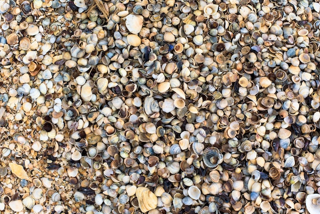 Shells on the shore, close-up