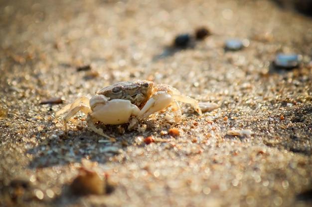 Shells and starfish on the sea. summer photo.