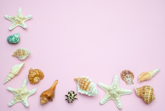 Shells and starfishes on pink background. copy space for your text.summer holiday concept