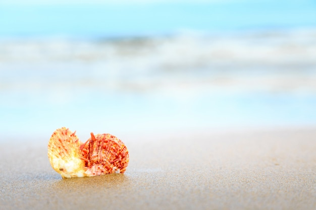 Shells on tropical beach with copy space for text or product.