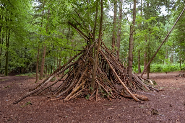 Shelter made from tree branches in a forest