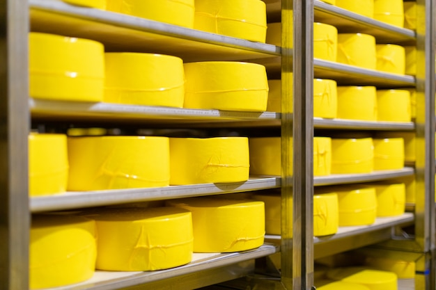 Shelves with cheese at a cheese warehouse close up