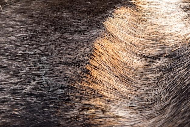Шуба овчарки. может использоваться как фон.