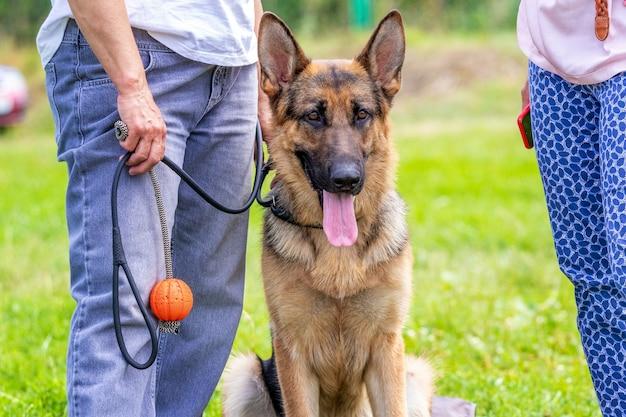 公園を散歩中に愛人の近くにいる羊飼いの犬、犬の訓練のためにプラスチックのボールを持っている女性
