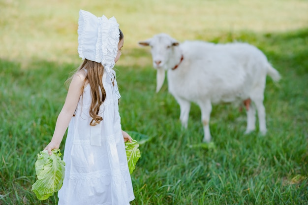 A shepherd girl in a white dress and bonnet feeds a goat with cabbage leaves, child feeding goat in spring field