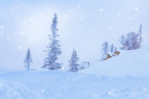 山shoriyaシベリア冬の風景の木に位置するロシアのシェレゲシュスキーリゾート
