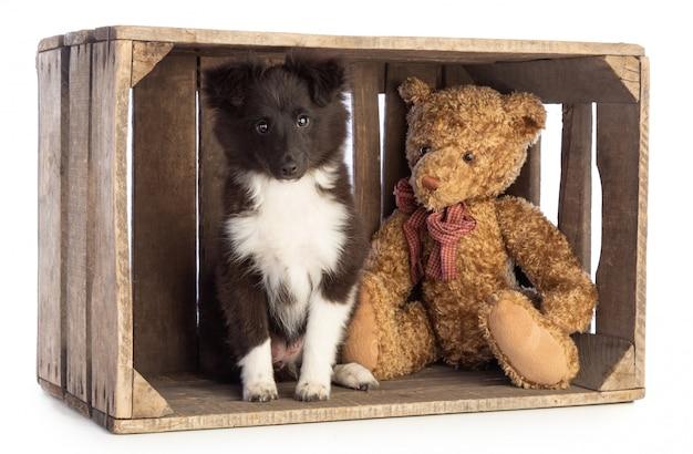 Shetland sheepdog in a wooden crate