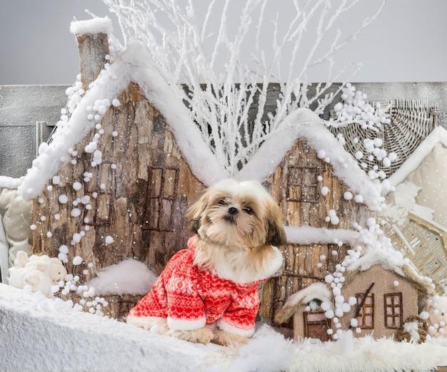 Ши-тцу перед рождественским пейзажем