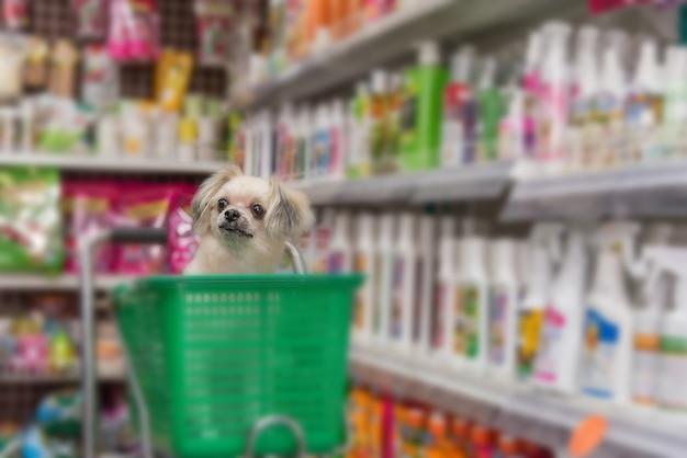 Shih-tzu、pomeranian、poodleと交配している犬が所有者を待っています