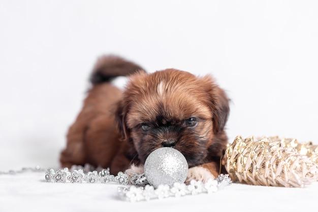 クリスマスの装飾と白のシーズーの子犬。クリスマスの装飾。