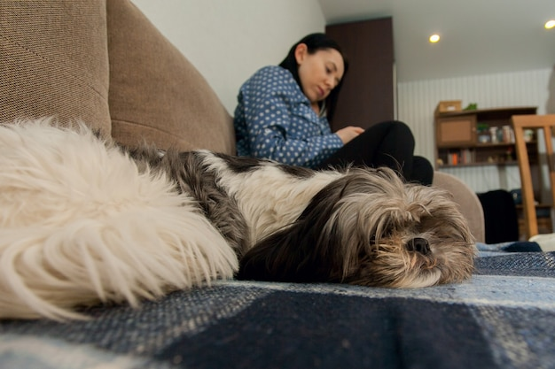オーナーの隣のソファで寝ているシーズー