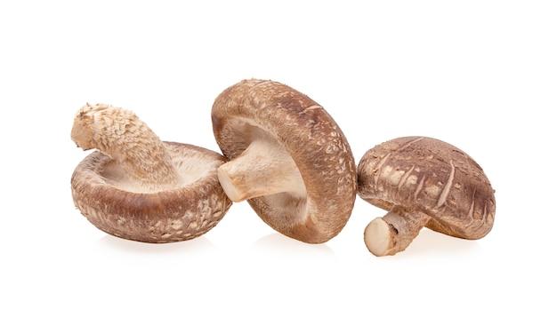 표고 버섯은 흰색 배경에 고립 된