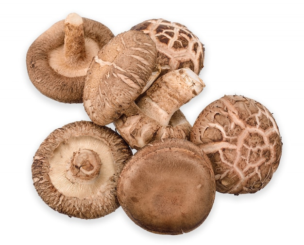 Shiitake mushroom isolated on white clipping path