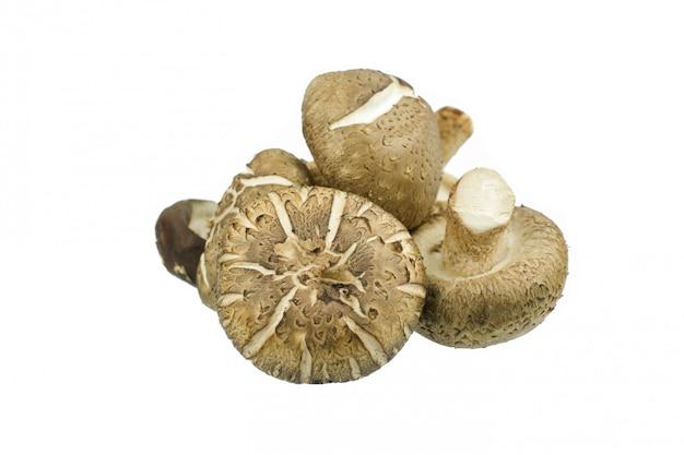 Shiitake mushroom isolatedon white