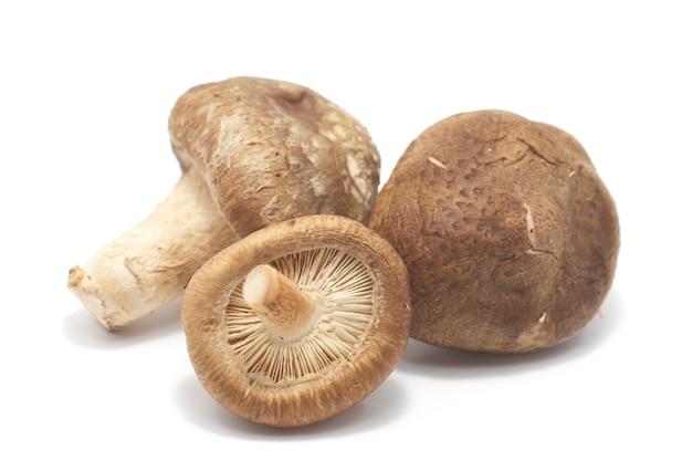 Shiitake mushroom on white background.