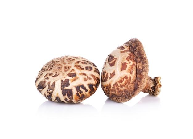 Shiitake mushroom on white