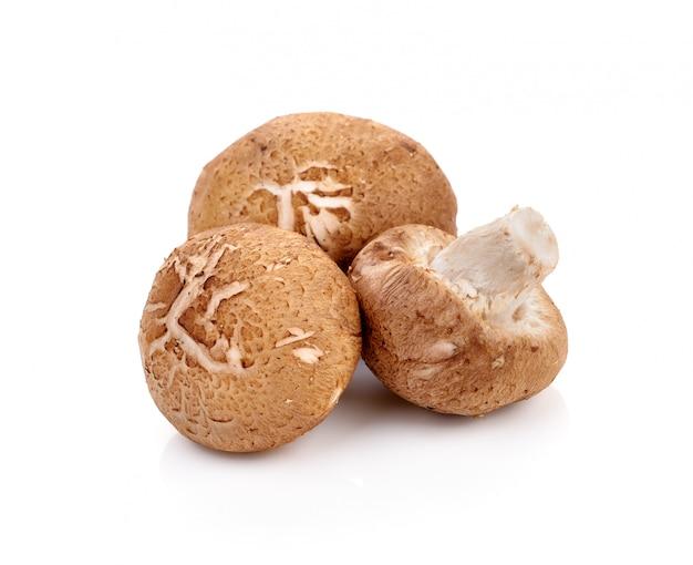 Shiitake mushroom