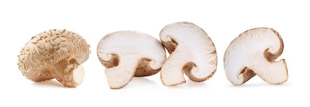 白い表面に分離された椎茸