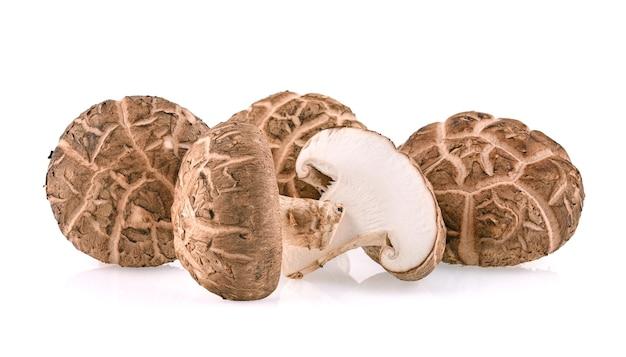 표고 버섯 흰색 절연