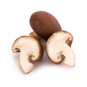 Shiitake mushrooms isolated on the white background