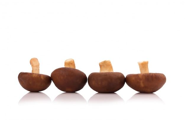 Shiitake mushrooms isolated on the white background