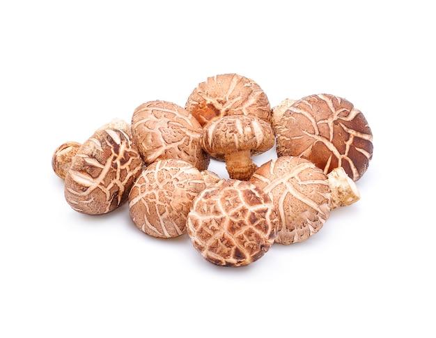 화이트에 표고 버섯