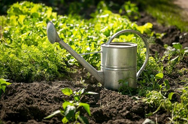 성장하는 양상추와 함께 정원 침대에 빛나는 스테인리스 물 뿌리개