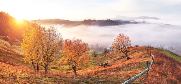 Shiny tree on a hill slope with sunny beams at mountain valley covered with fog.