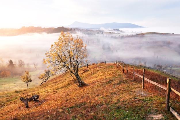 Albero splendente sul pendio di una collina con travi soleggiate a valle di montagna ricoperta di nebbia.