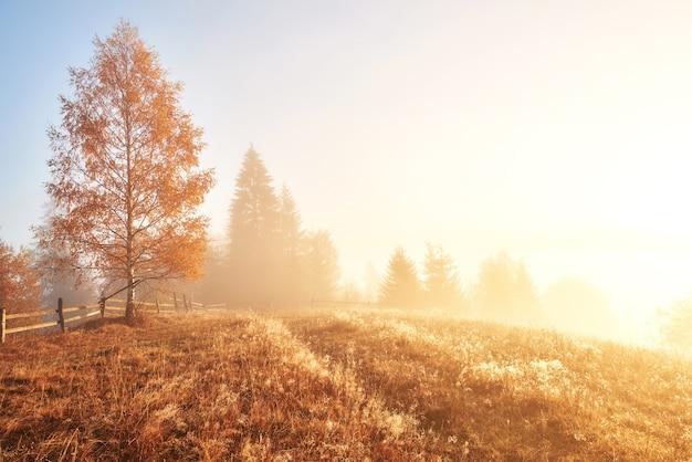 안개로 덮여 산 계곡에서 맑은 광선으로 언덕 경사면에 빛나는 나무.