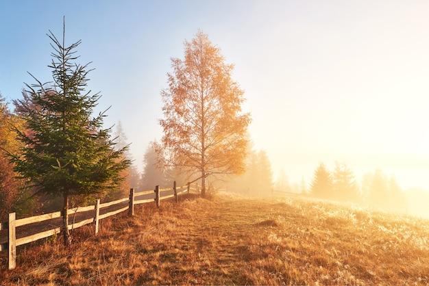 Блестящее дерево на склоне холма с солнечными лучами в горной долине, покрытой туманом.