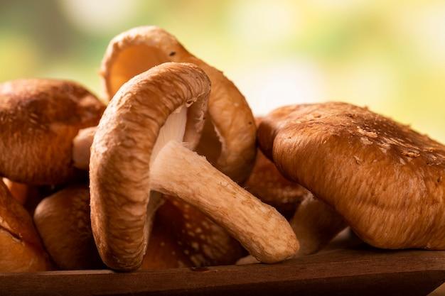 나무 배경에 shitake 버섯