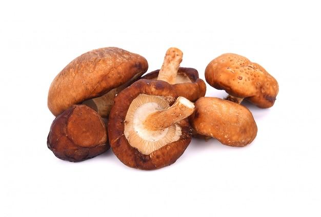 Shitake mushroom on the white