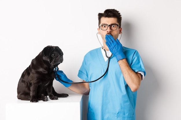 Shocked doctor in vet clinic examining dog with stethoscope, gasping amazed at camera while cute black pug sitting still on table, white.