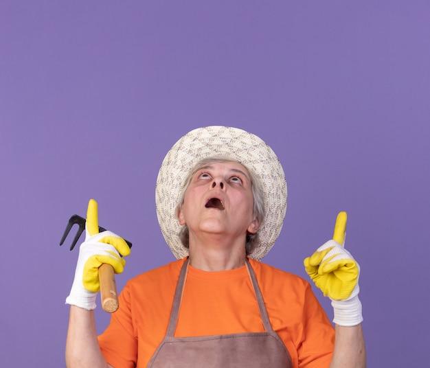 정원용 모자와 장갑을 끼고 충격을 받은 노년 여성 정원사는 복사 공간이 있는 보라색 벽에 격리된 갈퀴를 들고 지적합니다.