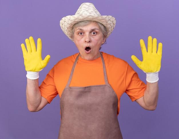 コピースペースと紫色の壁に隔離された上げられた手で立っているガーデニングの帽子と手袋を身に着けているショックを受けた年配の女性の庭師
