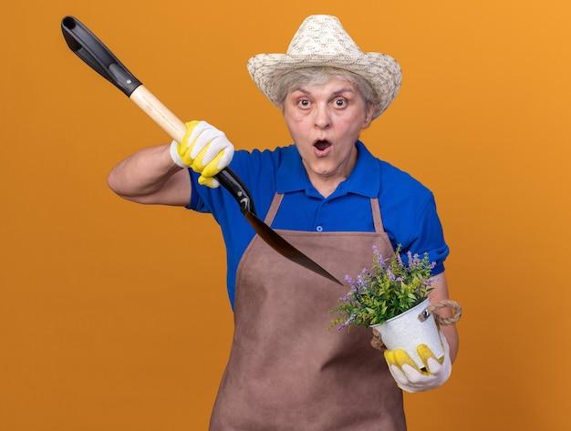 Scioccato giardiniere femminile anziano che indossa cappello e guanti da giardinaggio che tengono la vanga sopra il vaso di fiori isolato sulla parete arancione con spazio per le copie