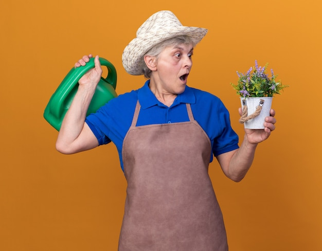 Scioccato giardiniere donna anziana che indossa cappello da giardinaggio tenendo annaffiatoio e guardando il vaso di fiori isolato sulla parete arancione con spazio di copia