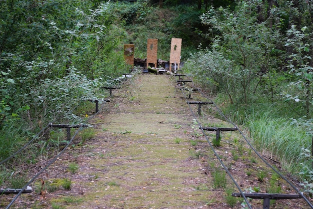 배경에 목표물이 있는 탁 트인 하늘 아래 여름 숲의 사격장
