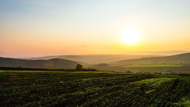 Всходы на полях фермы