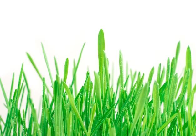 Всходы свежей сочной травы на белом столе. вид сбоку. концепция единства человека и природы.