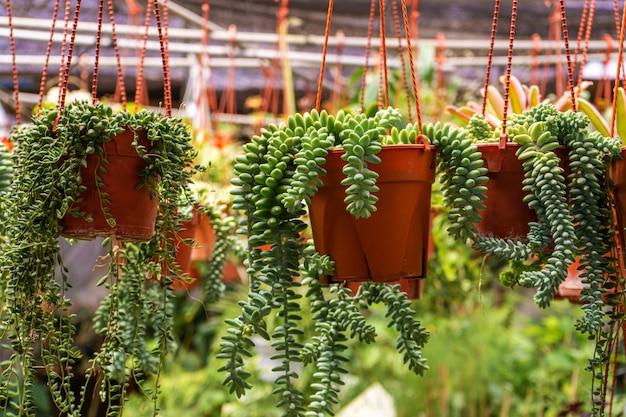 Магазин домашних растений и цветов в горшках. садоводство.
