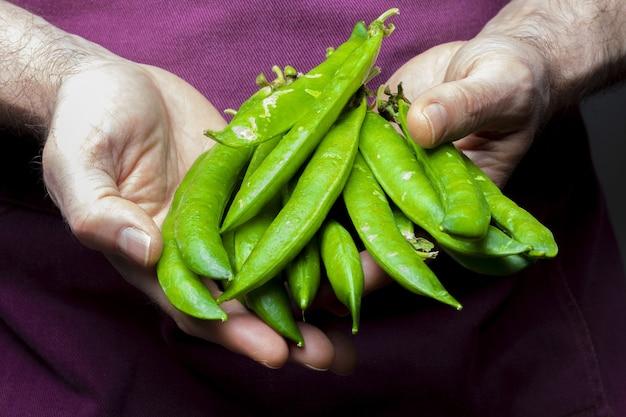 Лавочник предлагает зеленый, нежный, свежий и сырой горошек. передний план.