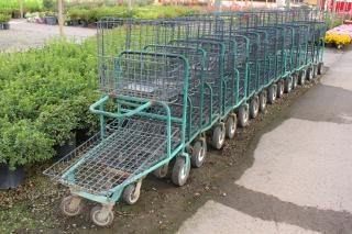 Shopping carts in a garden center