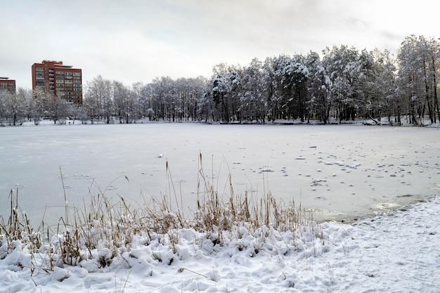 湖の岸には乾いた葦がたくさん。向こう岸には雪と赤レンガの高層ビルに覆われた森があります。冬の風景。